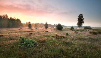 Nationaal park Dwingelderveld Drenthe