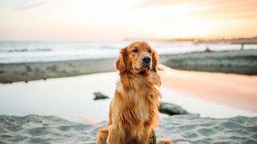 gezinshond hond kiezen kinderen