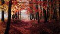 Bossen in de herfst, de perfecte plek om te wandelen