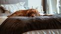 hond-slapen-onderzoek