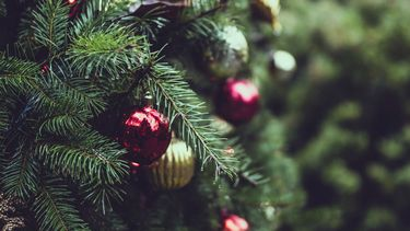 kerstmis - feestdagen - kerstboom - kerstboom kopen - famme.nl