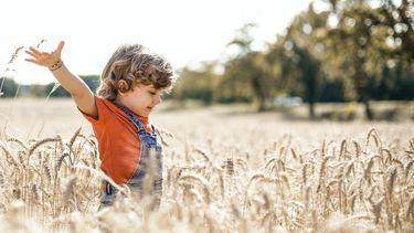 Jongen speelt in graanveld in scandinavië