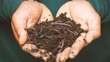 Een handje vol met wormen en aarde als toetje voor Halloween