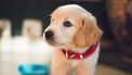 hondenverzekering-afsluiten