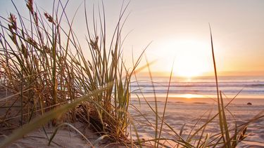 Hoera, de strandpaviljoens in Nederland zijn weer open