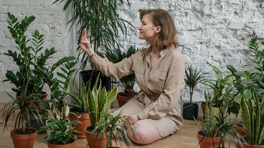 kamerplanten / vrouw zit op de grond tussen kamerplanten