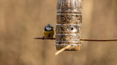 vogelvoerhangers