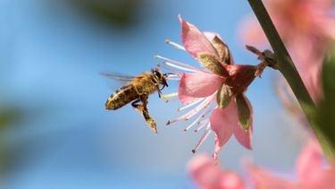 lepel-suiker-bijen
