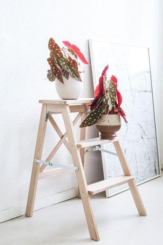 Schilderen / Polkadot Begonia
