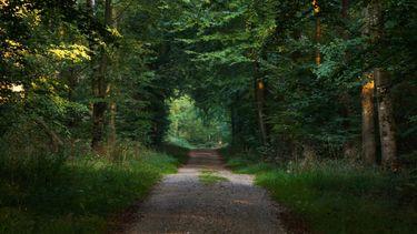 vrouw is aan het wandelen in het bos